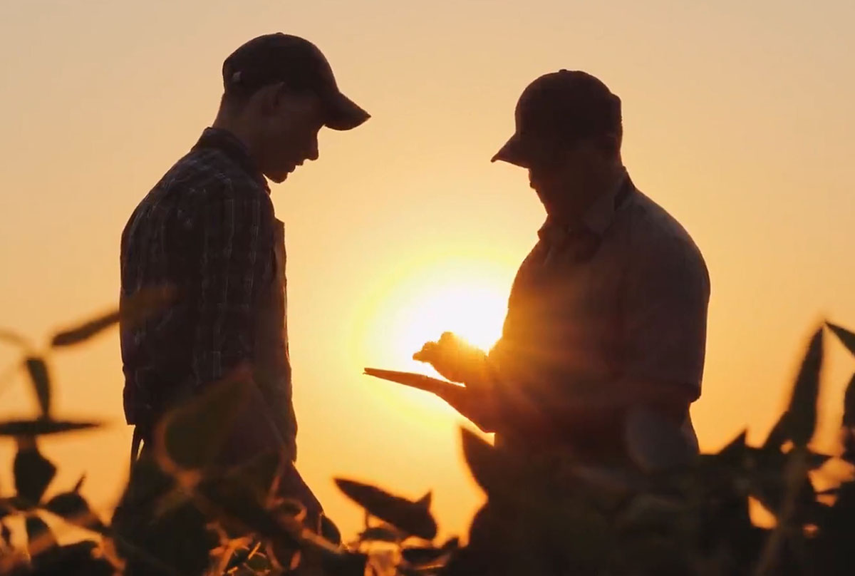 Agriculture, farmers talking in a field at sunset